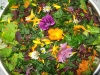 Salat aus einem Gemeinschaftsgarten