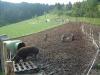 Ferkel und ihre Eltern (Wollschweine) haben die Fläche umgegraben 2006