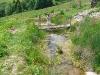 Teich mit Bewohnern 2009